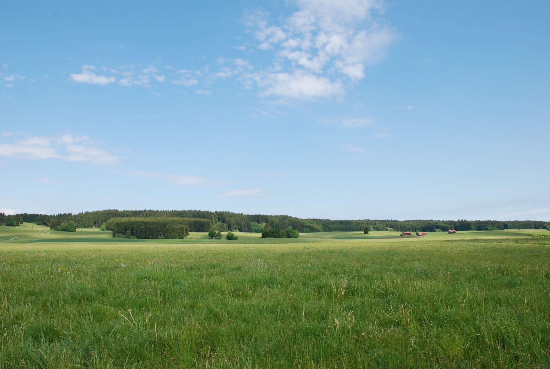 Belle vue d'un grand terrain avec une forêt à l'arrière plan