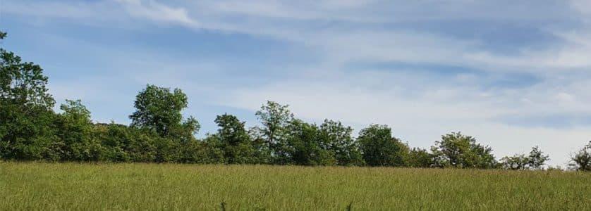 Terrain constructible dans les Landes avec herbe et arbres